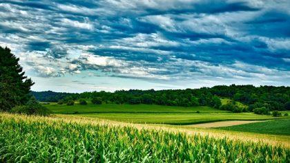 10.2.1.1. Regime Simplificado de Pequenos Investimentos nas Explorações Agrícolas